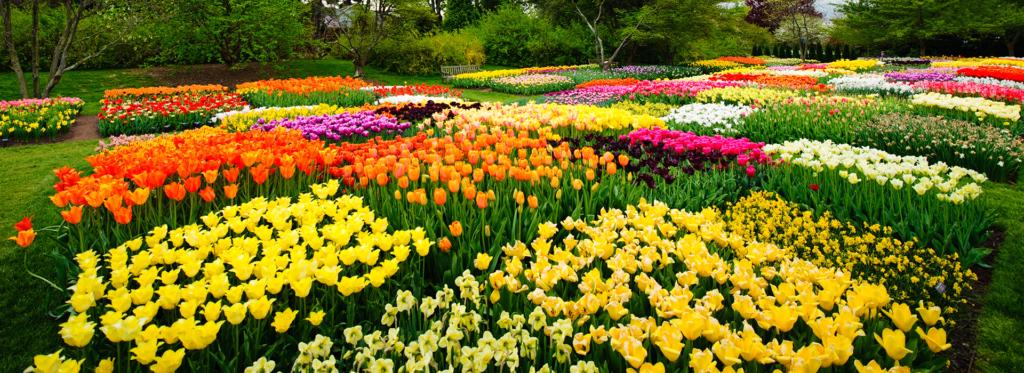 Spring Tourism